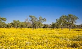 Gekleurde gebieden van Mallorca Stock Foto