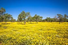 Gekleurde gebieden van Mallorca Royalty-vrije Stock Afbeeldingen
