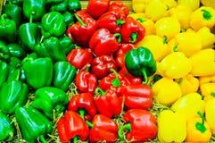 Gekleurde groene paprikapaprika Stock Foto's