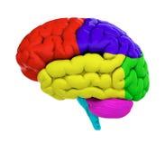 Gekleurde hersenen Stock Afbeelding