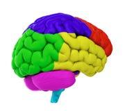Gekleurde hersenen Royalty-vrije Stock Foto's