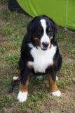 Gekleurde hond Royalty-vrije Stock Foto's