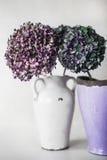 Gekleurde hydrangea hortensiabloemen Stock Foto's