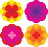 Gekleurde madeliefjebloemen Stock Fotografie