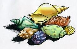 Gekleurde overzeese shells en hun schaduwen stock illustratie