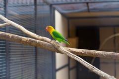 Gekleurde papegaai Royalty-vrije Stock Foto