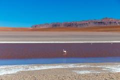 Gekleurde Rode Altiplanic-Lagune, een ondiep zout meer in het zuidwesten van Altiplano van Bolivië stock foto's