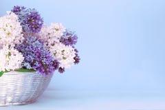 Gekleurde Seringen op lichtblauwe pastelkleurachtergrond Gevoelig boeket in een zilveren mand Romantisch concept Huwelijksgroet stock foto's