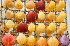 Gekleurde shells Royalty-vrije Stock Foto's