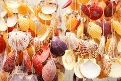 Gekleurde shells Stock Foto