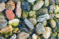 Gekleurde stenen onder het duidelijke water van Meer Baikal Royalty-vrije Stock Fotografie