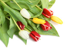 Gekleurde tulpen Stock Afbeelding