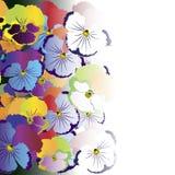 Gekleurde viooltjebloemen op witte achtergrond Stock Foto's