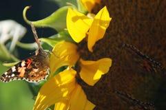 Gekleurde vlinder Royalty-vrije Stock Foto's