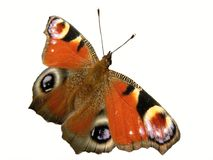Gekleurde vlinder royalty-vrije stock afbeeldingen