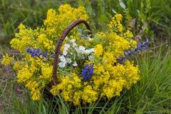 Gekleurde wildflowers stock foto