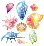Gekleurde zeeschelp Stock Foto