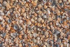Gekleurde zeeschelpen Stock Foto