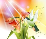 Gekleurde zoemende vogel vector illustratie