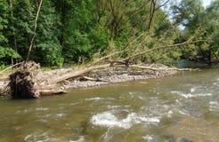 Geklopt onderaan een boom op riverbank Royalty-vrije Stock Fotografie