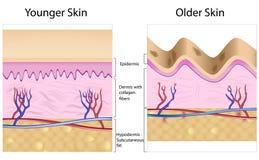 Geknittert gegen glatte Haut lizenzfreie abbildung