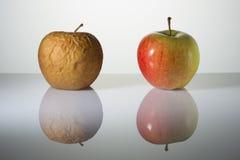 Geknitterte und frische Äpfel auf einer Oberfläche mit Reflexion Lizenzfreies Stockbild