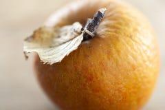 Geknitterter Apfel im Herbst lizenzfreie stockbilder