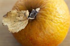 Geknitterter Apfel im Herbst stockfotografie