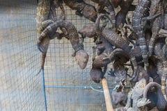 Geko in cage in market in Indoensia. Stock Images