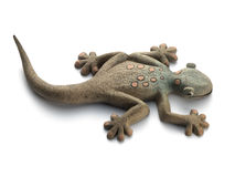 Geko on the white background Stock Photos