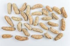 Gekochte Erdnüsse Lizenzfreie Stockbilder