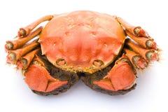 Gekochte Krabbe der Draufsicht Stockfoto