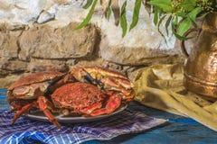 Gekochte Krabbe und Seespinne Stockfotos