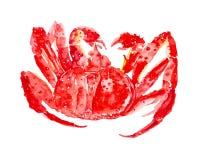 Gekochte rote K?nigskrabbe Aquarellillustration lokalisiert auf wei?em Hintergrund stockfotos