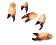 Gekochte Scheren von der Krabbe Stockfoto
