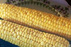 Gekochter Mais auf der Platte stockfotos