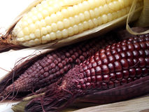 Gekochter schwarzer Mais Lizenzfreies Stockfoto