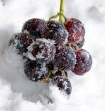 Gekoelde druiven royalty-vrije stock fotografie