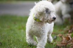 Gekoelde hond Stock Foto's