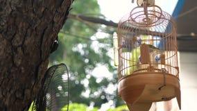 Gekooide liedvogels voor verkoop in kooien op de straten van het hoofdstad oude kwart, Hanoi, Vietnam stock footage