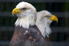 Gekooide Vrijheid stock afbeeldingen
