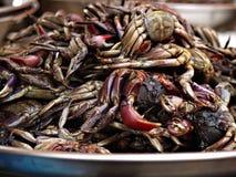 Gekookte krabben Stock Foto's