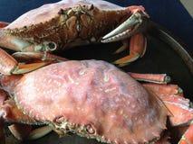 Gekookte krabben Dungeness Stock Afbeelding