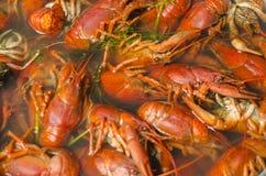 Gekookte rivierkreeften in een pan met dille Stock Foto's
