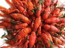 Gekookte rode rivierkreeften Stock Afbeelding