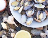Gekookte Tweekleppige schelpdieren Royalty-vrije Stock Afbeeldingen
