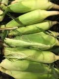 Gekookte zoete maïskolven Nog in de schillen stock foto
