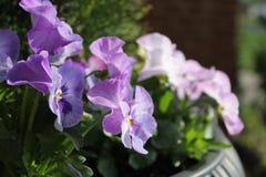 Gekräuselte Blumenblätter Lizenzfreie Stockfotografie