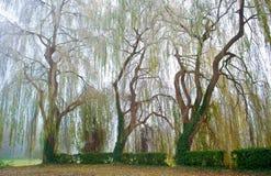 Gekrümmte Bäume Stockfoto