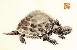 Gekrümmte Schildkröte Lizenzfreie Stockbilder